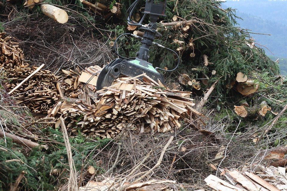 Biomass wood chips